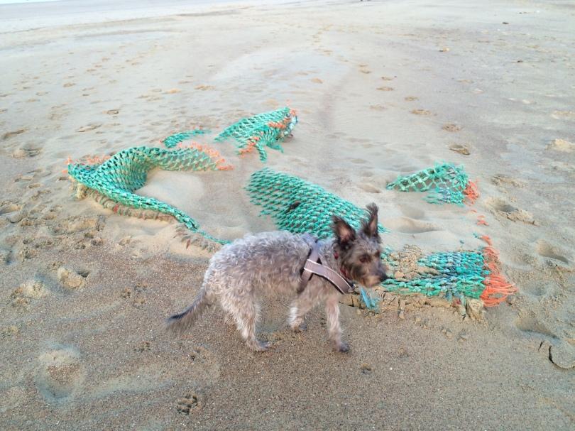 Kleiner Mischlingshind vor einem grünen angeschwemmten Fischernetz