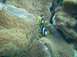 Bunte Fische und noch gesunde Korallen