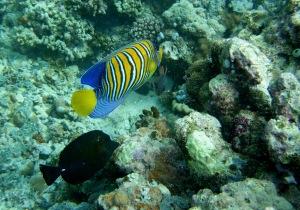 überall bunte Fische auf den gibt es zu entdecken