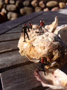 Miniaturtaucher auf einer Auster