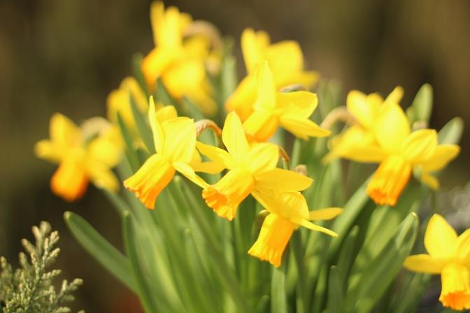 Schnell, schnell den Frühling einfangen….
